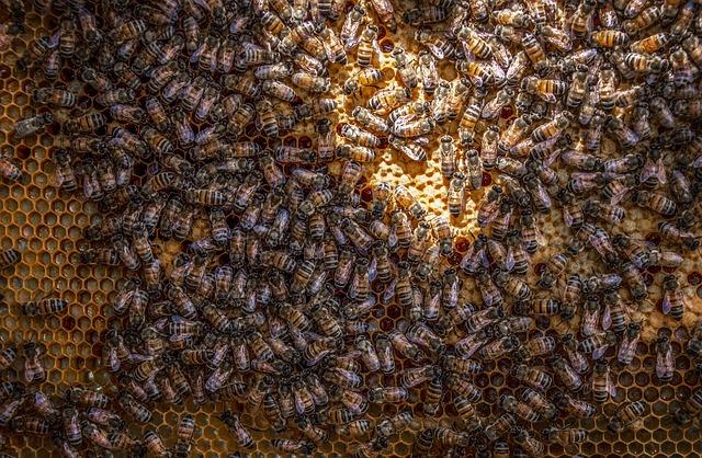 Bienen arbeiten nach Regeln