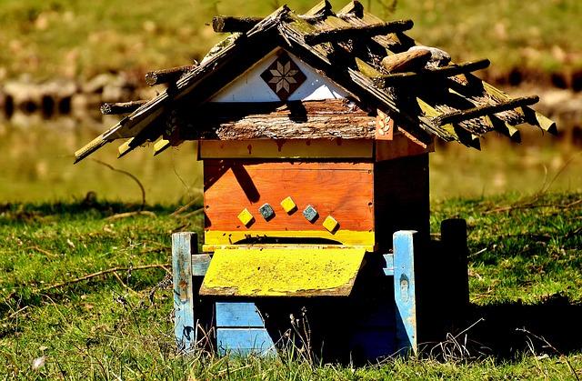Bienen - Apitherapie