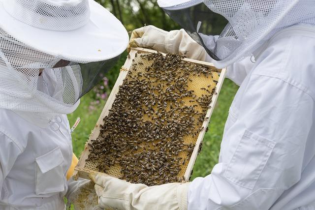 Honig ist ein Produkt von Tieren