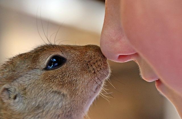 Die Nase ist ein Wunderwerk - auch mit Schnupfen.