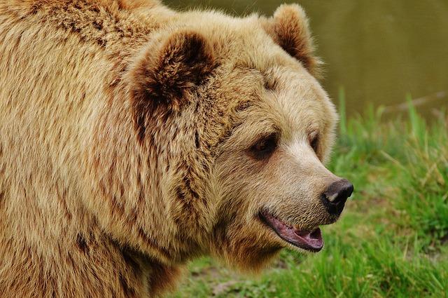Bärenfang - das ostpreußische Kulturgetränk