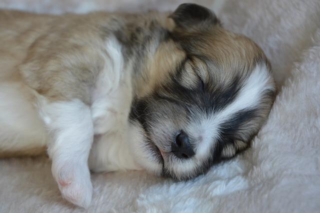 Halsschmerzen beim Hund - Schonung und Ruhe.   Alt: