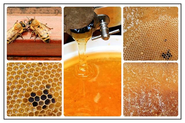 Ohne Honig kein Bärenfang