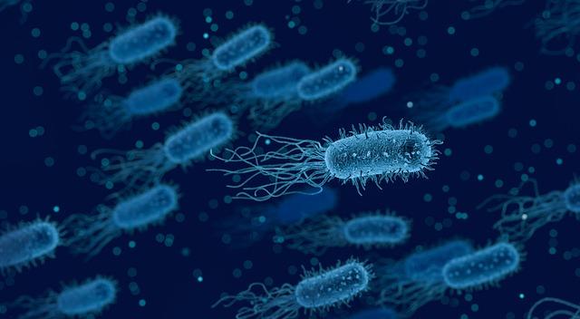 Pickel sind eine bakterielle Infektion.
