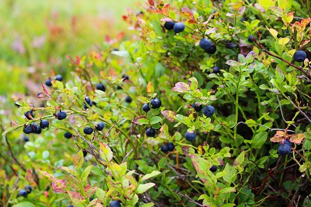 Flavonoide in Pflanzen